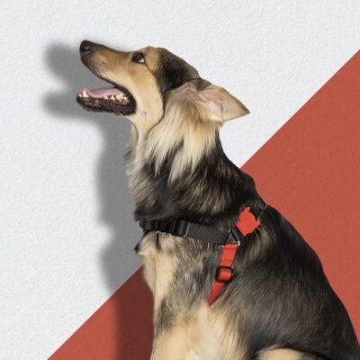 Hundesele som modvirker træk fra hunden